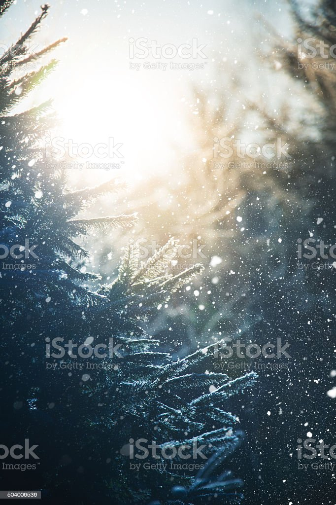 Snowfall in the woods stock photo