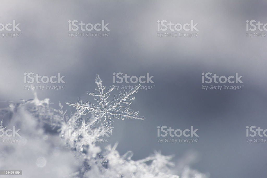 snowflake isolated on neutral background. close up. one stock photo