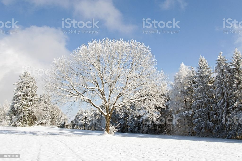 Snowie Forest stock photo
