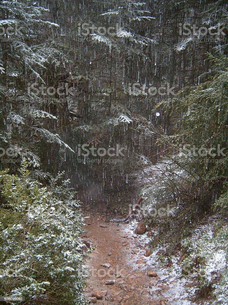 snowing in the forest stock photo