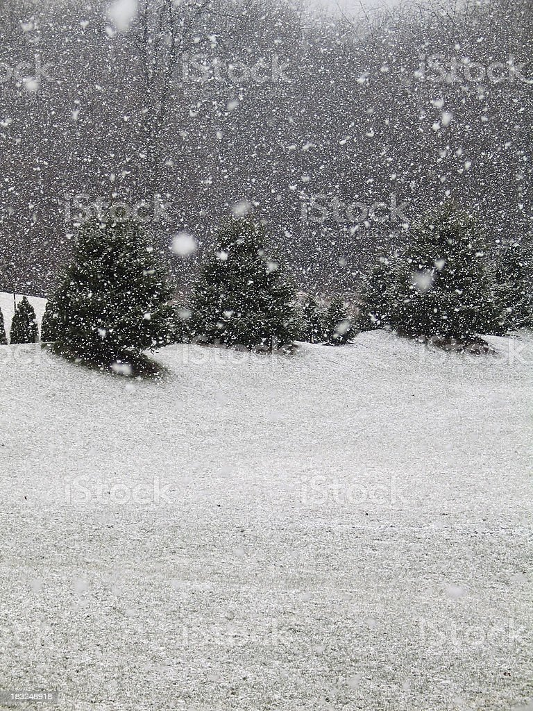 Snowing In The Springtime royalty-free stock photo