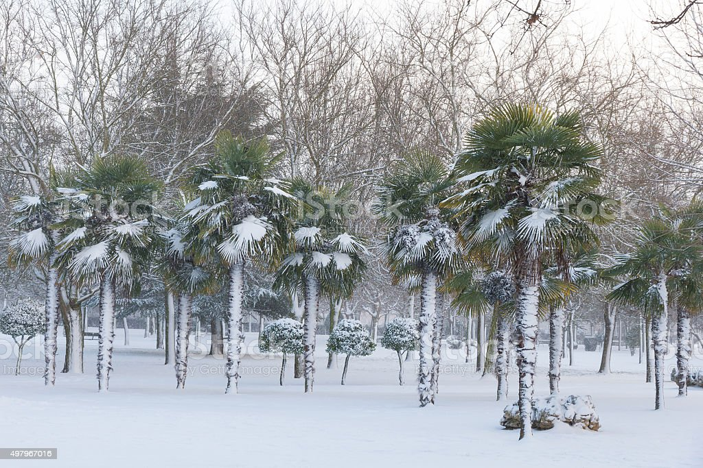 Snowing in Urban Public Park With Palm Trees stock photo