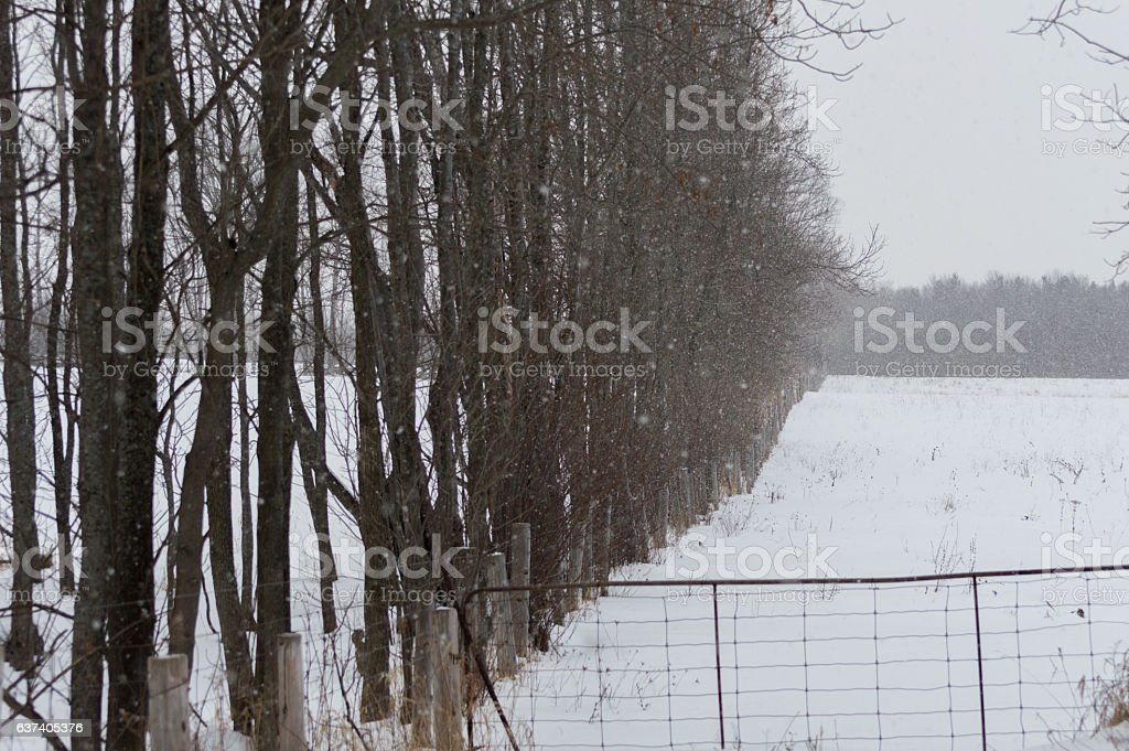 Snowing on a pasture field and trees along the edge stock photo