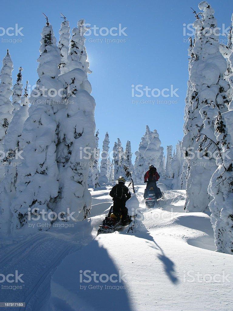 snowmobiling through trees royalty-free stock photo