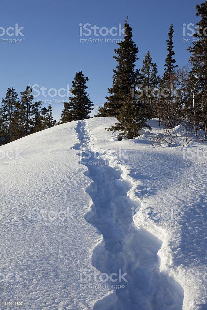 Snowshoe tracks in winter wonderland royalty-free stock photo