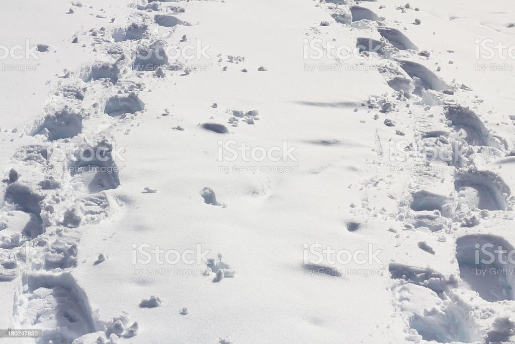 Snowshoe tracks of 2 people converge, Whistler, BC royalty-free stock photo