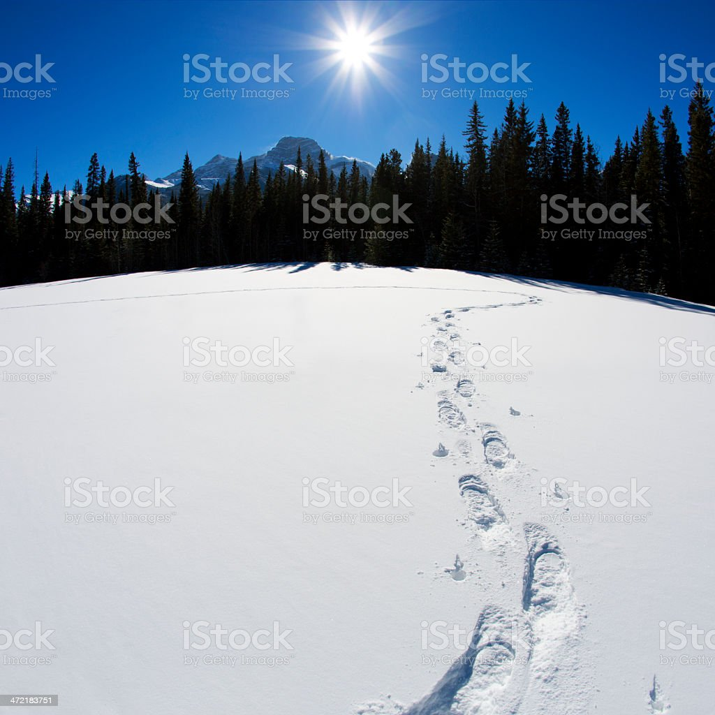 Snowshoe Tracks stock photo