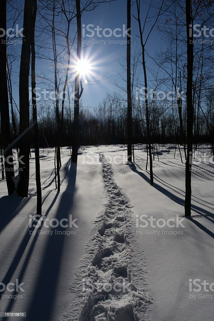 Snowshoe Trail in Fresh Powder Snow in the Forest royalty-free stock photo