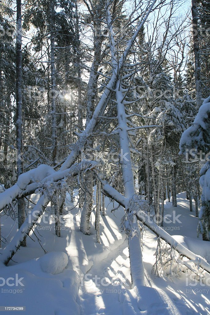 Snowshoe Trail in Fresh Powder Snow in the Forest stock photo