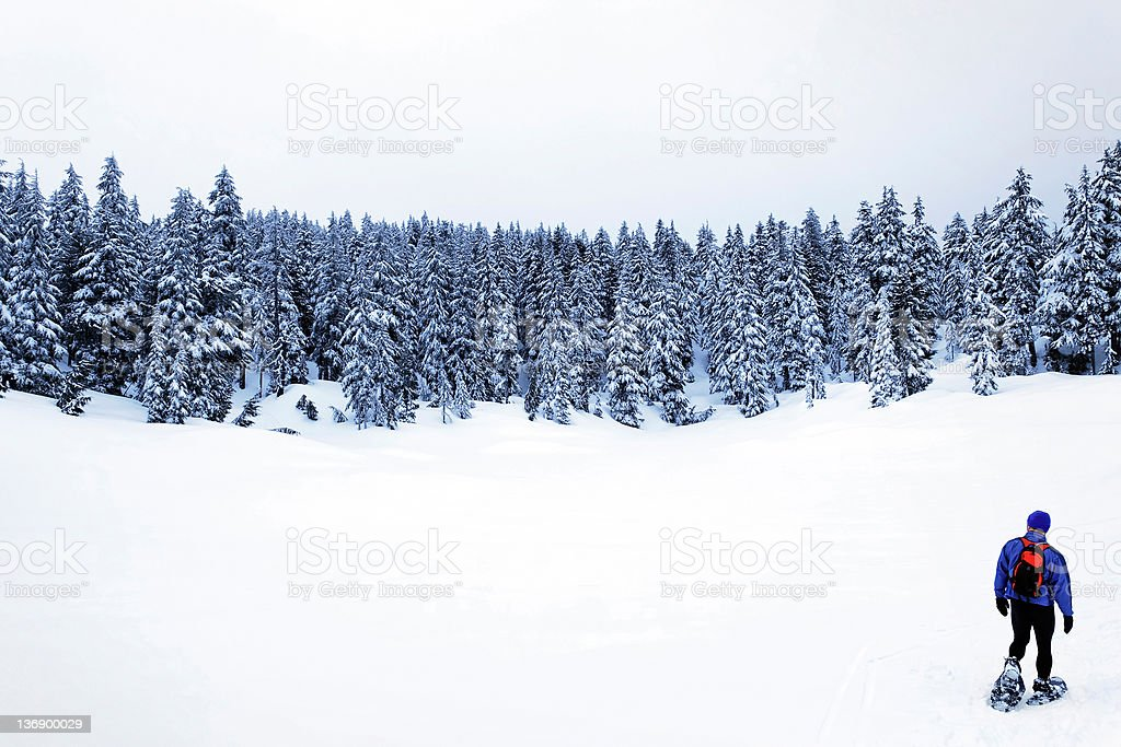 snowshoeing in winter forest stock photo