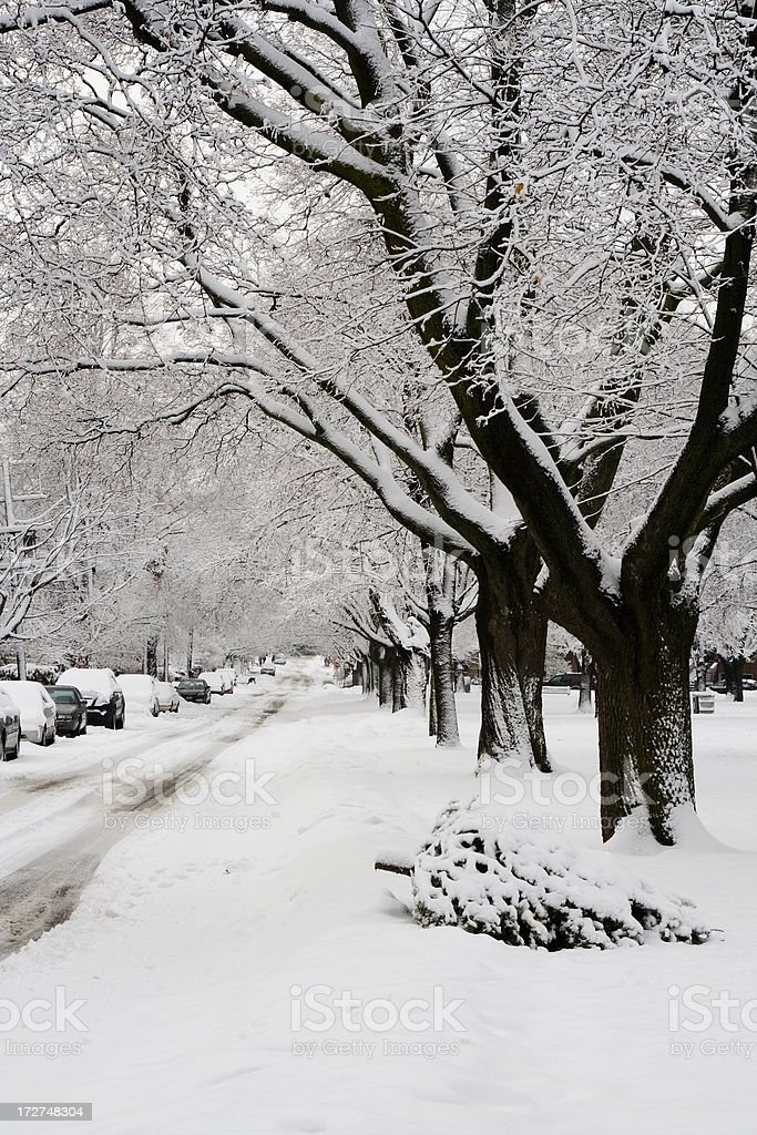Snowstorm after Christmas royalty-free stock photo