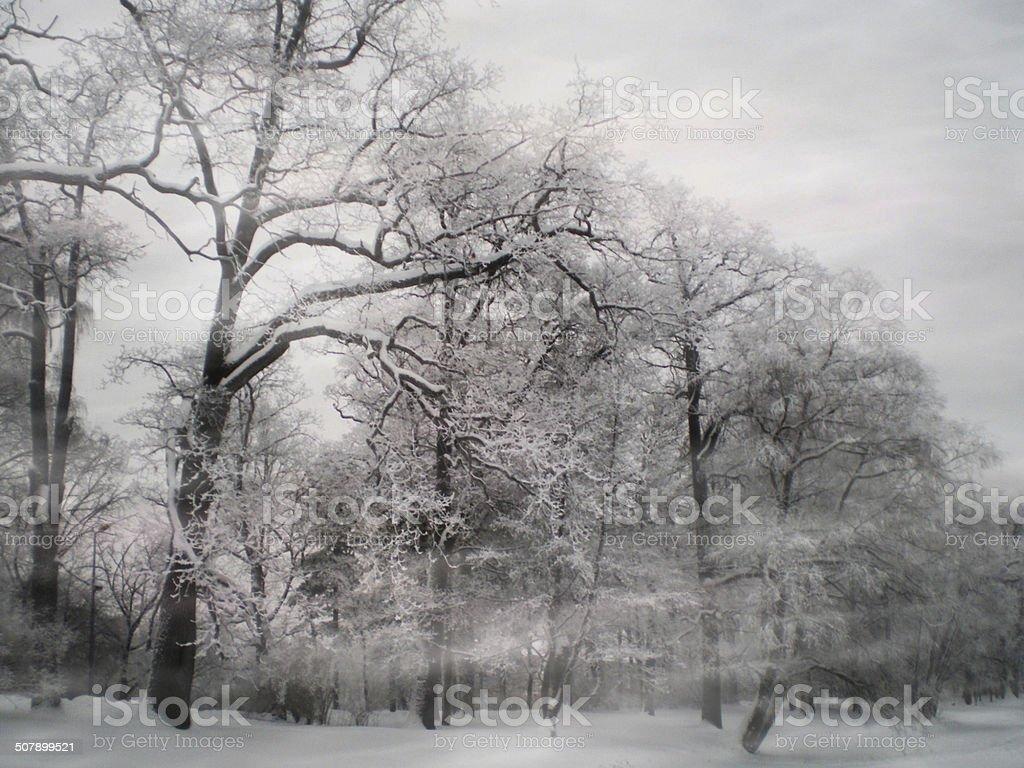 snowstorm foto de stock royalty-free