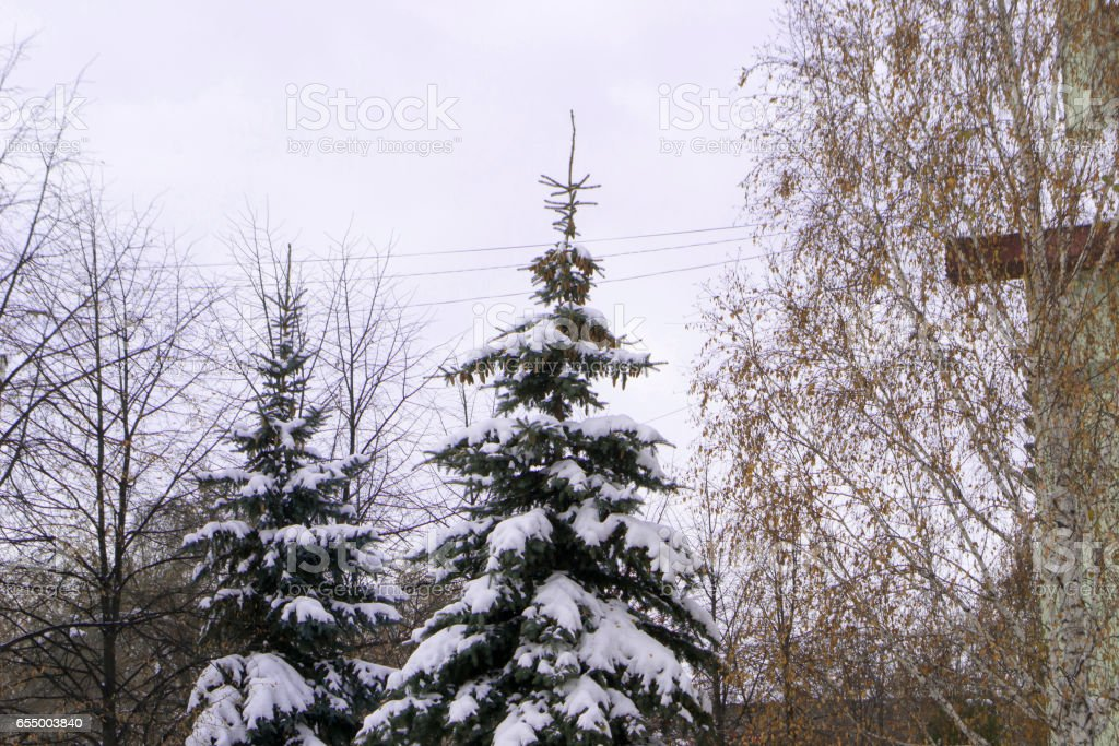 Snow-strewn tree in the beginning of winter stock photo