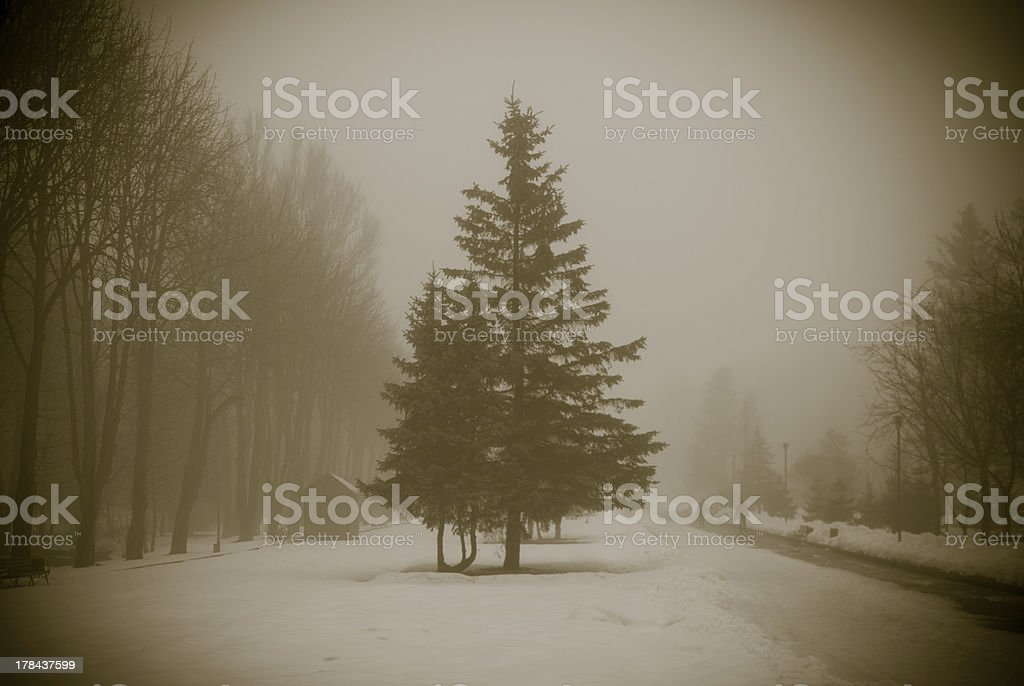 Snowtree in Winter royalty-free stock photo