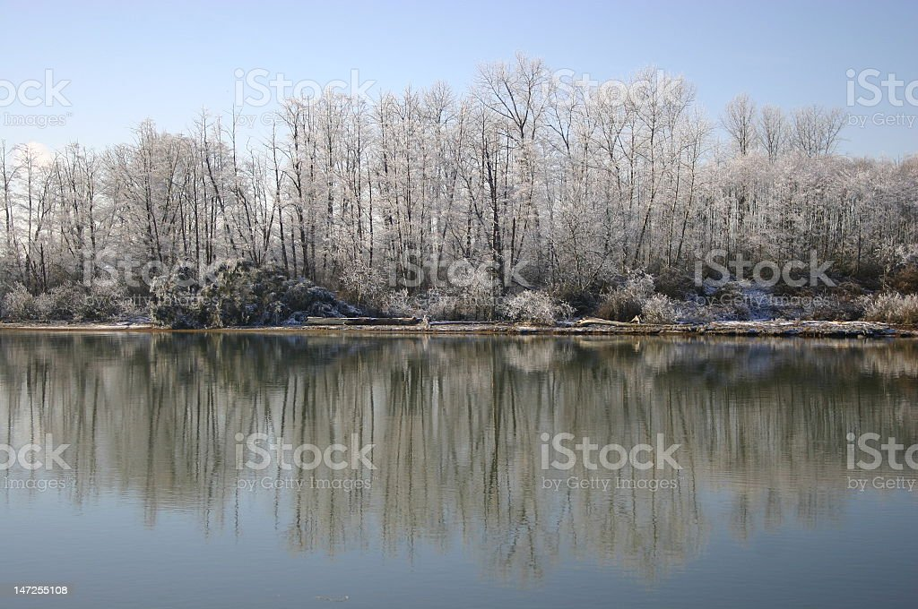 Snowy Alders royalty-free stock photo