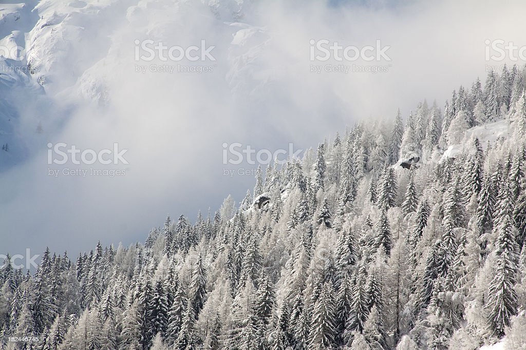 Snowy alpine trees royalty-free stock photo