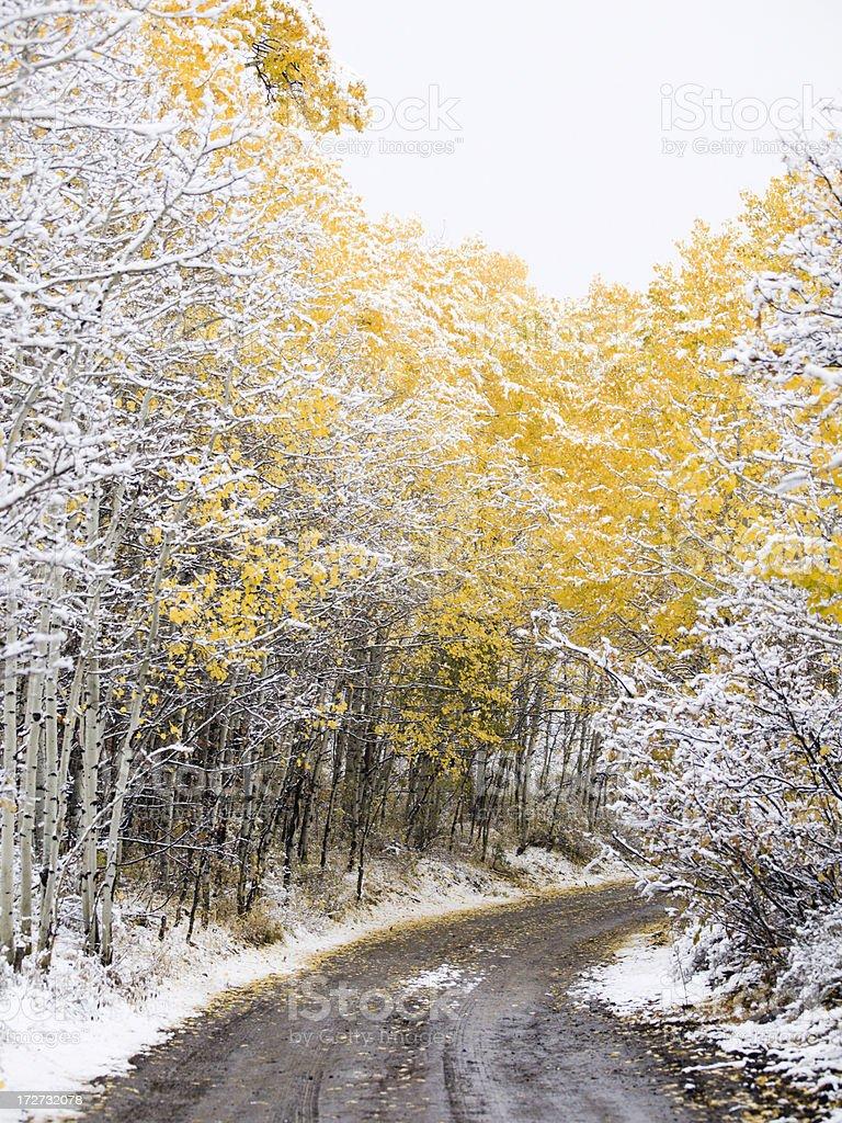 Snowy Aspen Road royalty-free stock photo