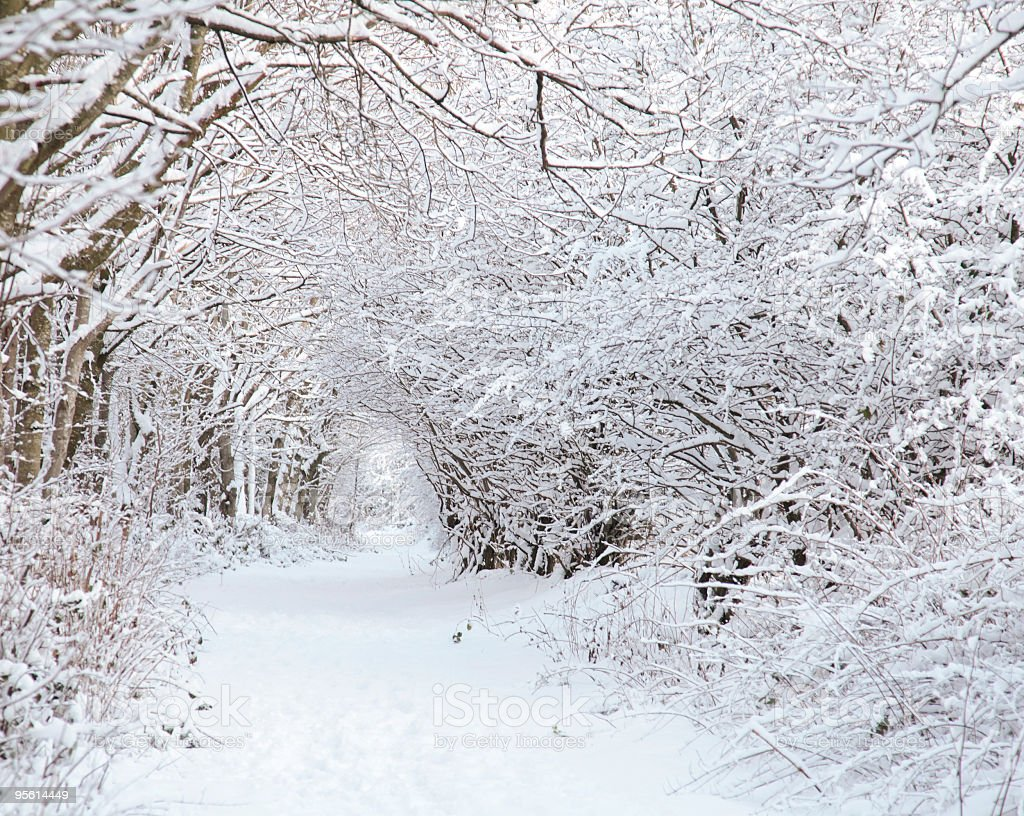 Snowy Avenue stock photo