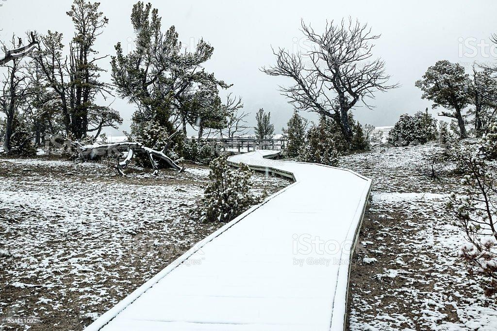 Snowy Boardwalk stock photo