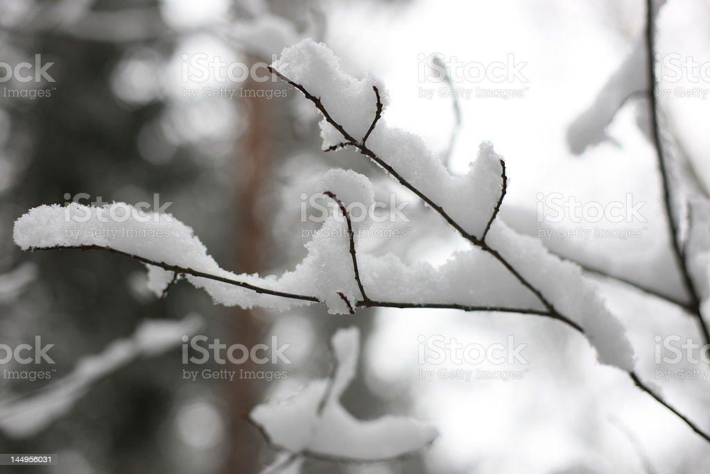 Snowy branch royalty-free stock photo