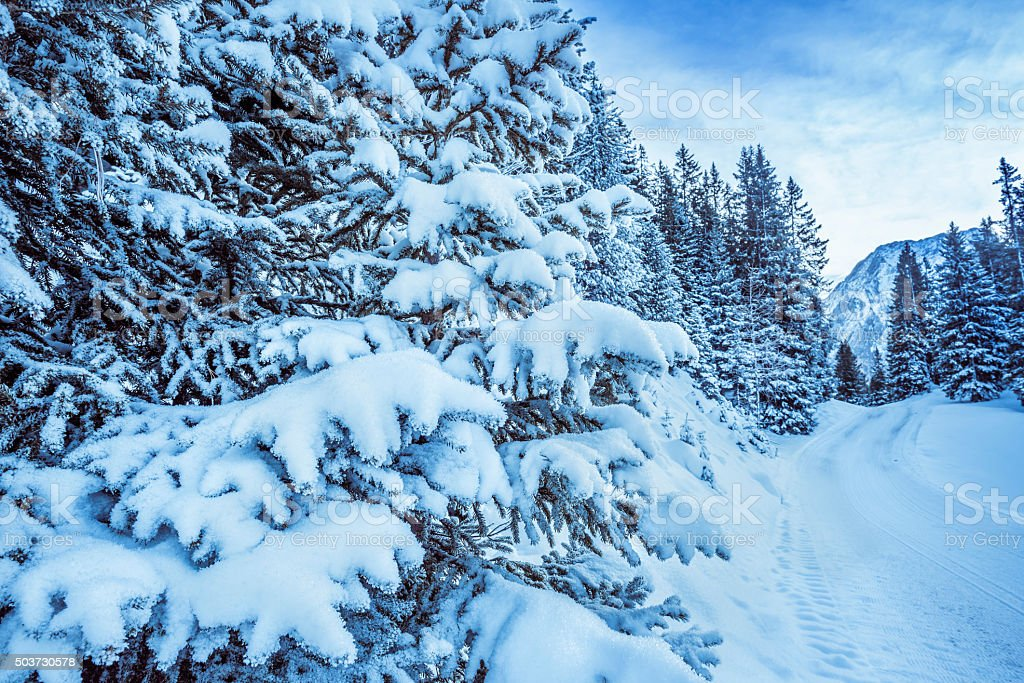 Snowy branches of trees stock photo
