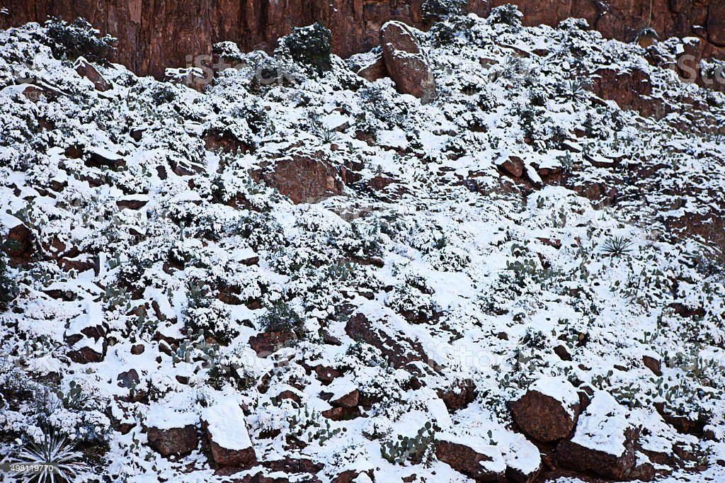 Snowy Cactus Desert Landscape stock photo