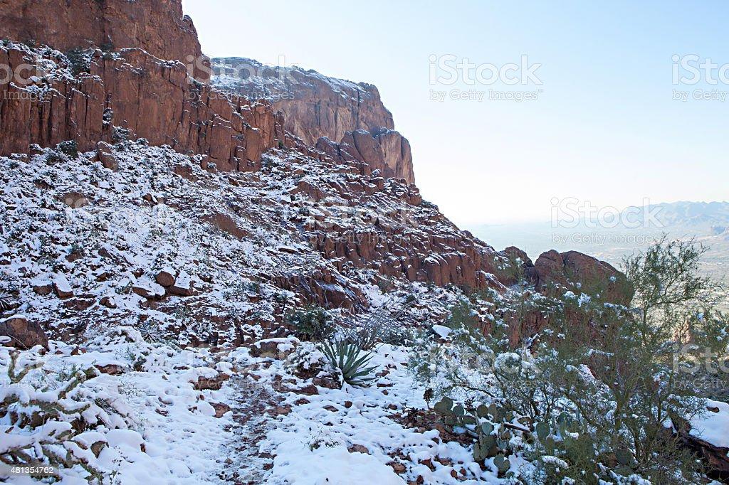 Snowy Cactus in Phoenix stock photo
