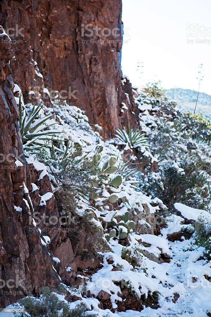 Snowy Cactus - Rare Arizona Storm stock photo