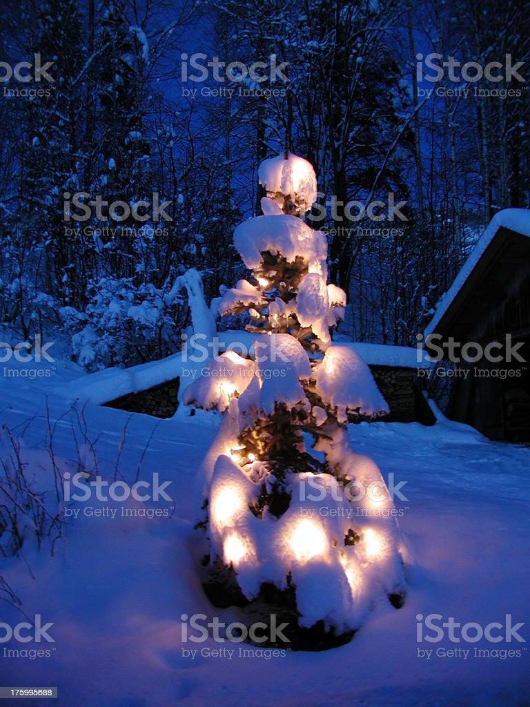 Snowy christmas tree royalty-free stock photo