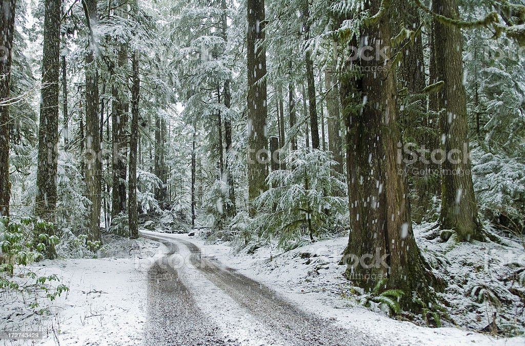 Snowy day in woods stock photo