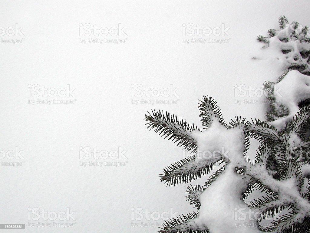 snowy evergreen corner royalty-free stock photo