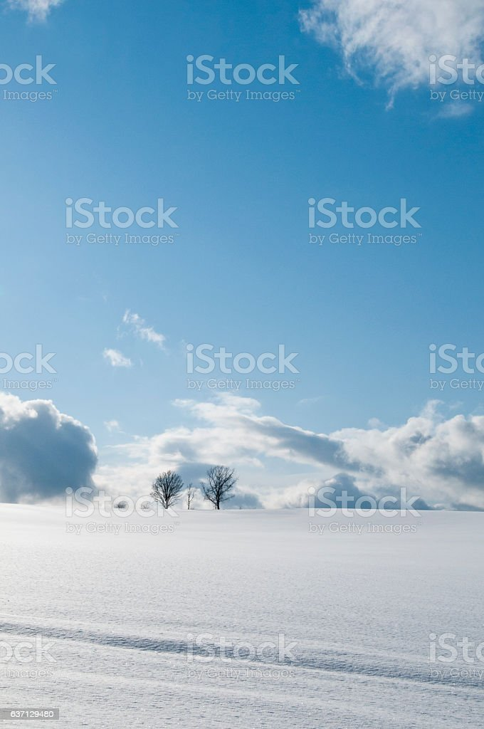 Snowy field and bule sky stock photo