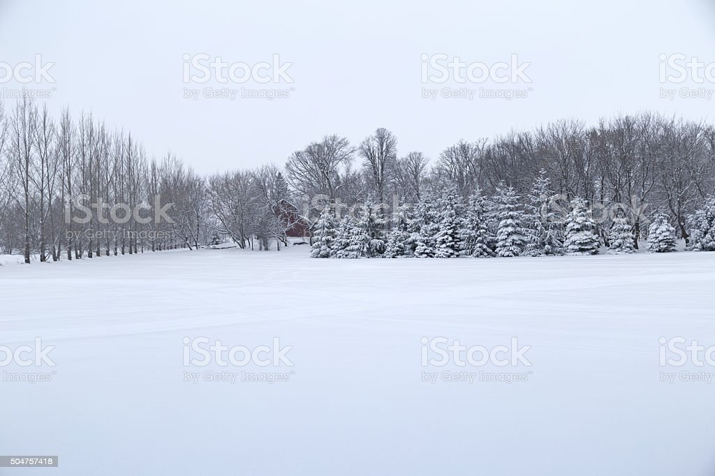 Snowy Field with Rows of Trees - Minnesota Winter stock photo