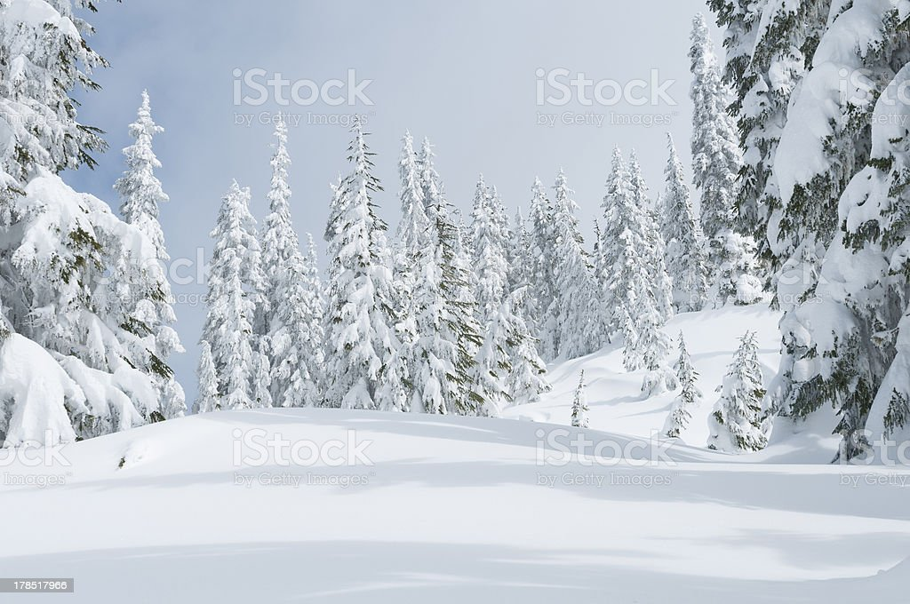 Snowy forest, after the snowstorm royalty-free stock photo