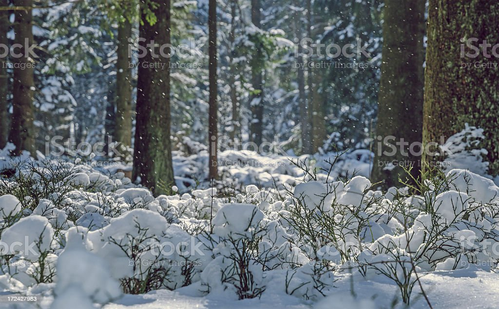 Snowy forest in Winter Vintage Photo stock photo