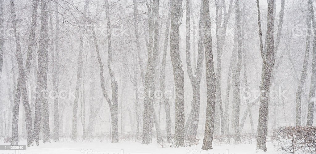 Snowy forest landscape during a winter blizzard  stock photo