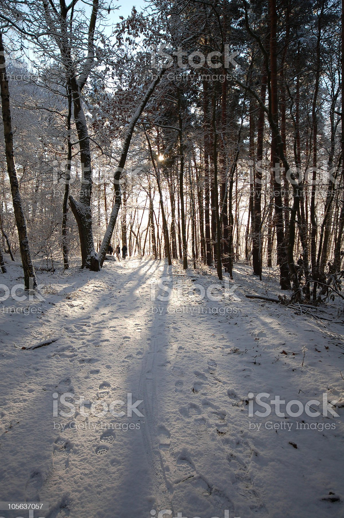 snowy forest on a lake royalty-free stock photo