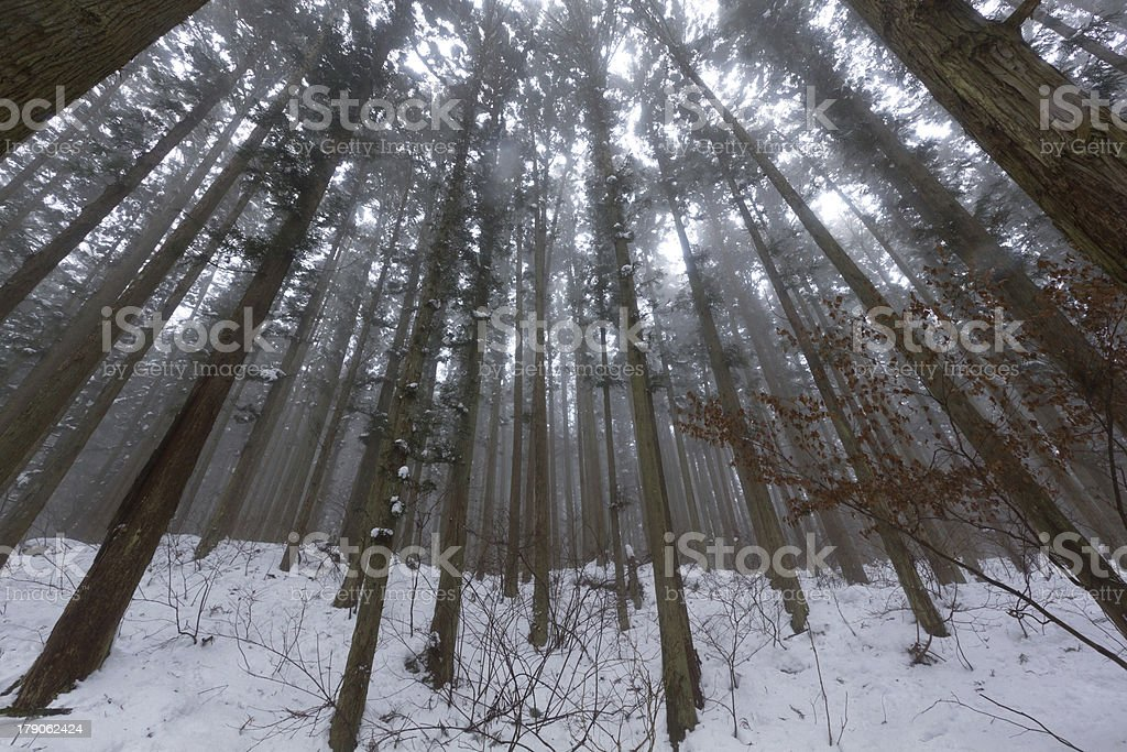 Snowy Forest royalty-free stock photo