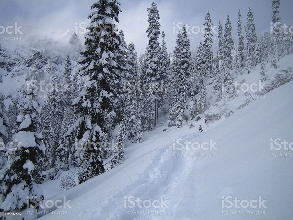 Snowy Forest with Trail and Two Snowshoers stock photo