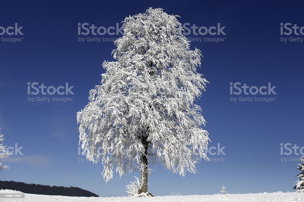 Snowy frozen tree stock photo