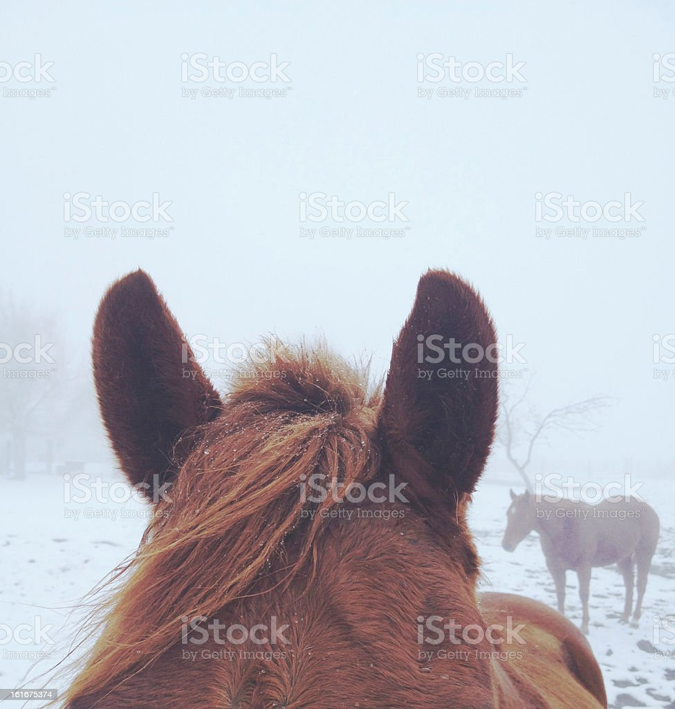 Snowy Hair royalty-free stock photo