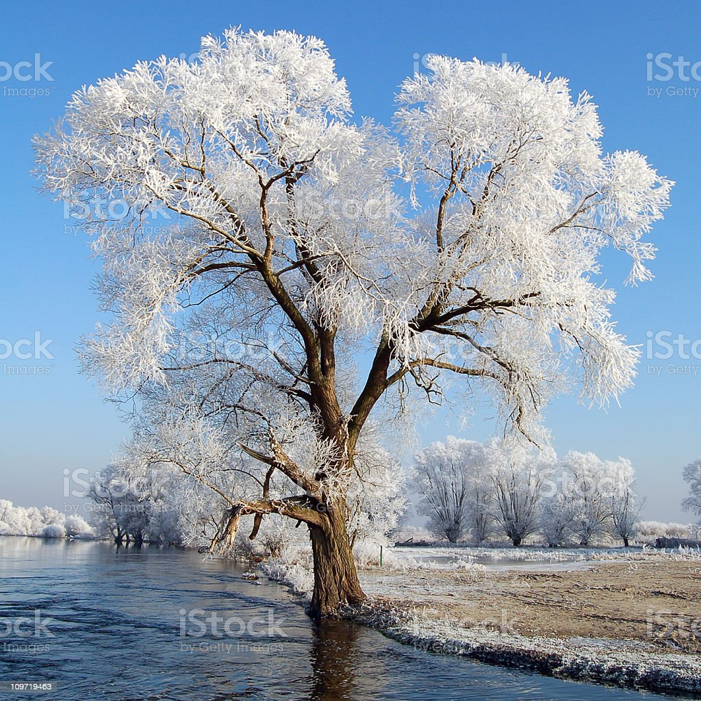 snowy Havel River with willow tree (Germany) royalty-free stock photo