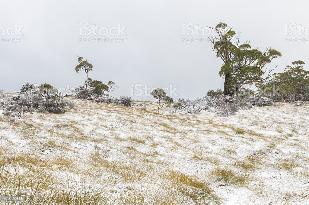 Snowy landscape at the Cradle Valley Boardwalk stock photo