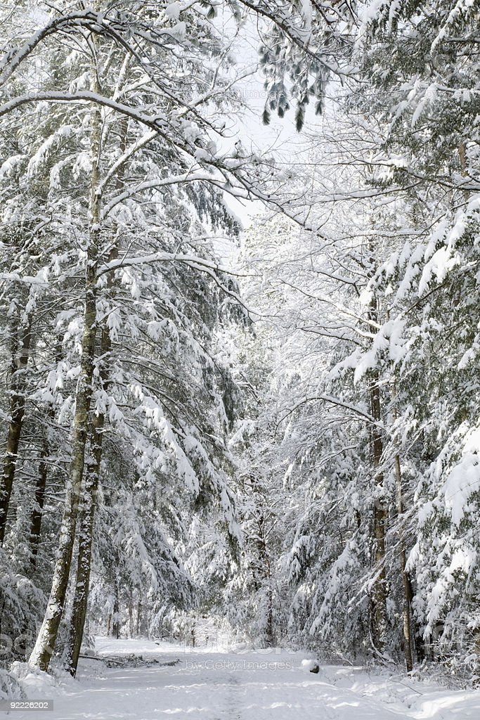 Snowy Landscape, Great Smoky Mtns NP, TN royalty-free stock photo