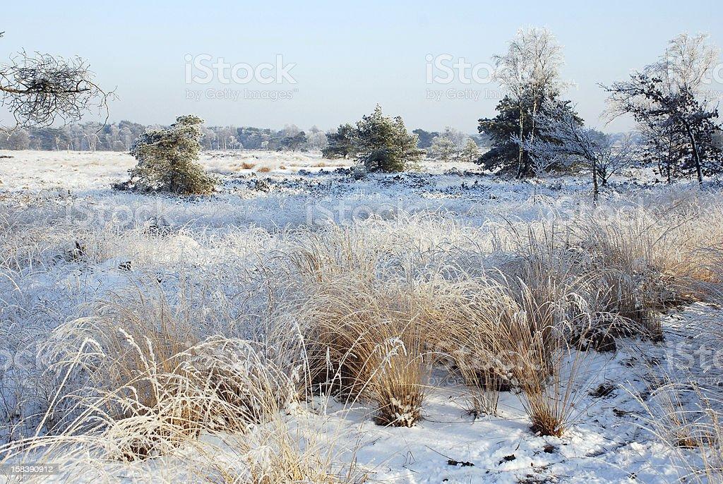 Snowy landscape royalty-free stock photo