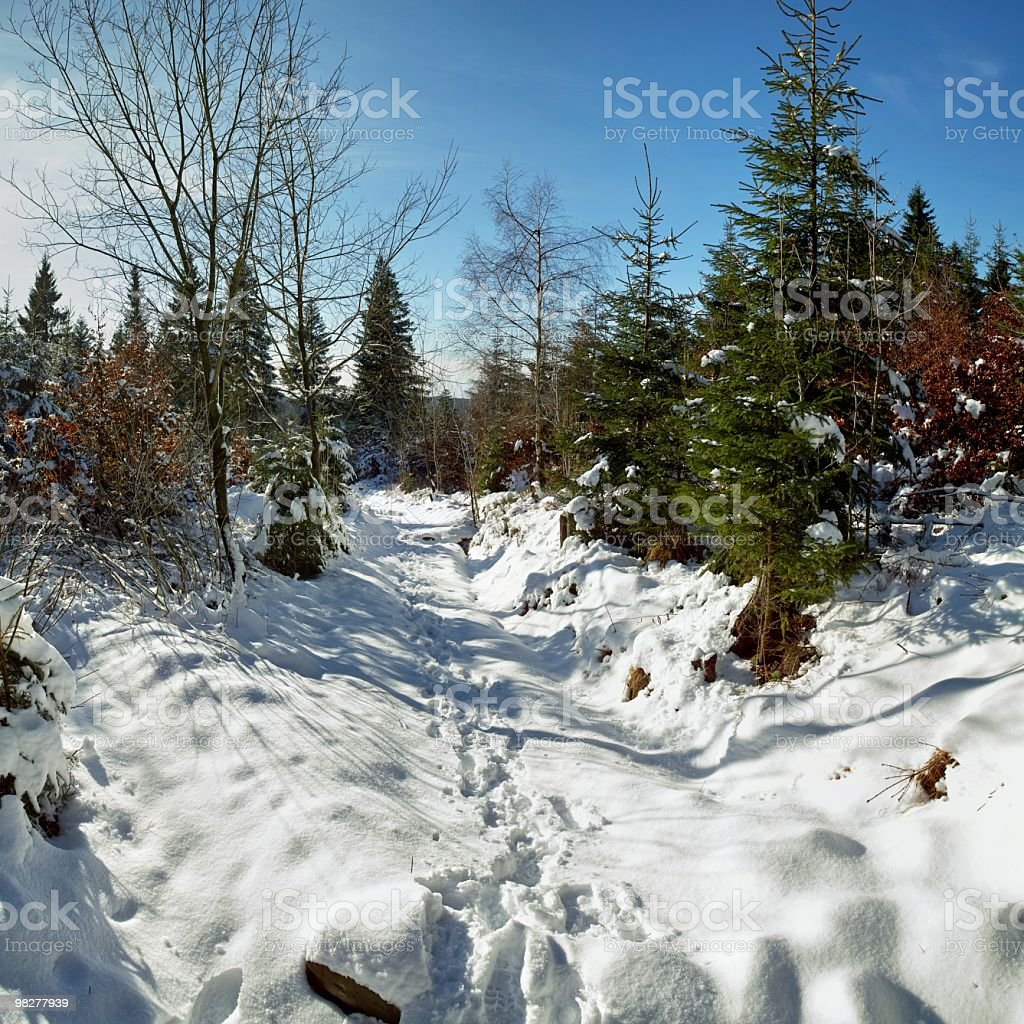 snowy landscape with fir, trail and sun stock photo