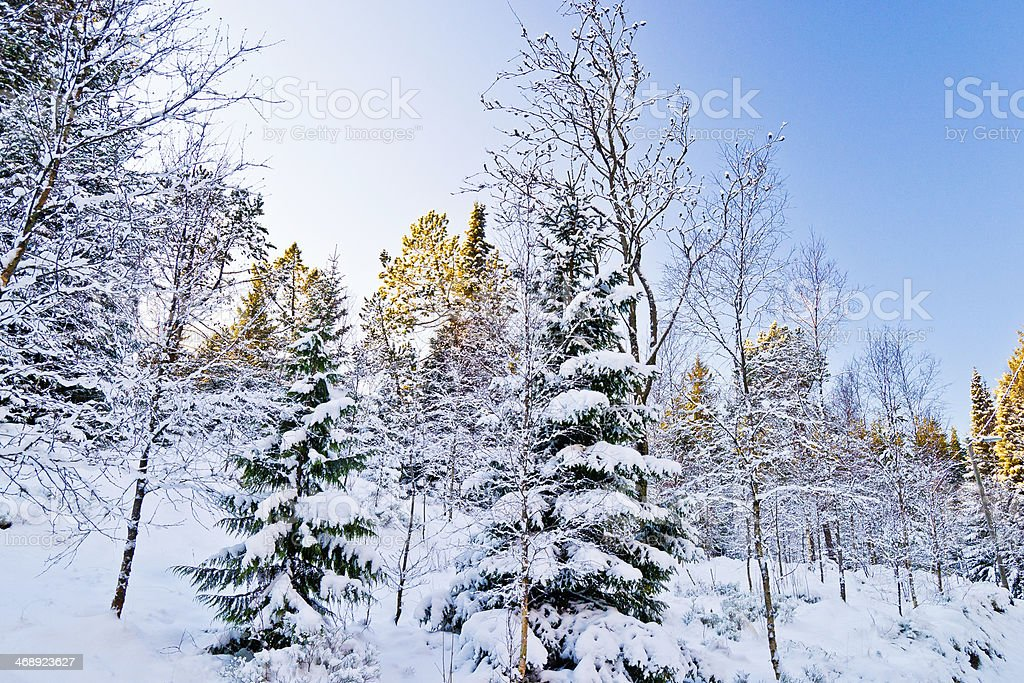 Snowy landscapes royalty-free stock photo