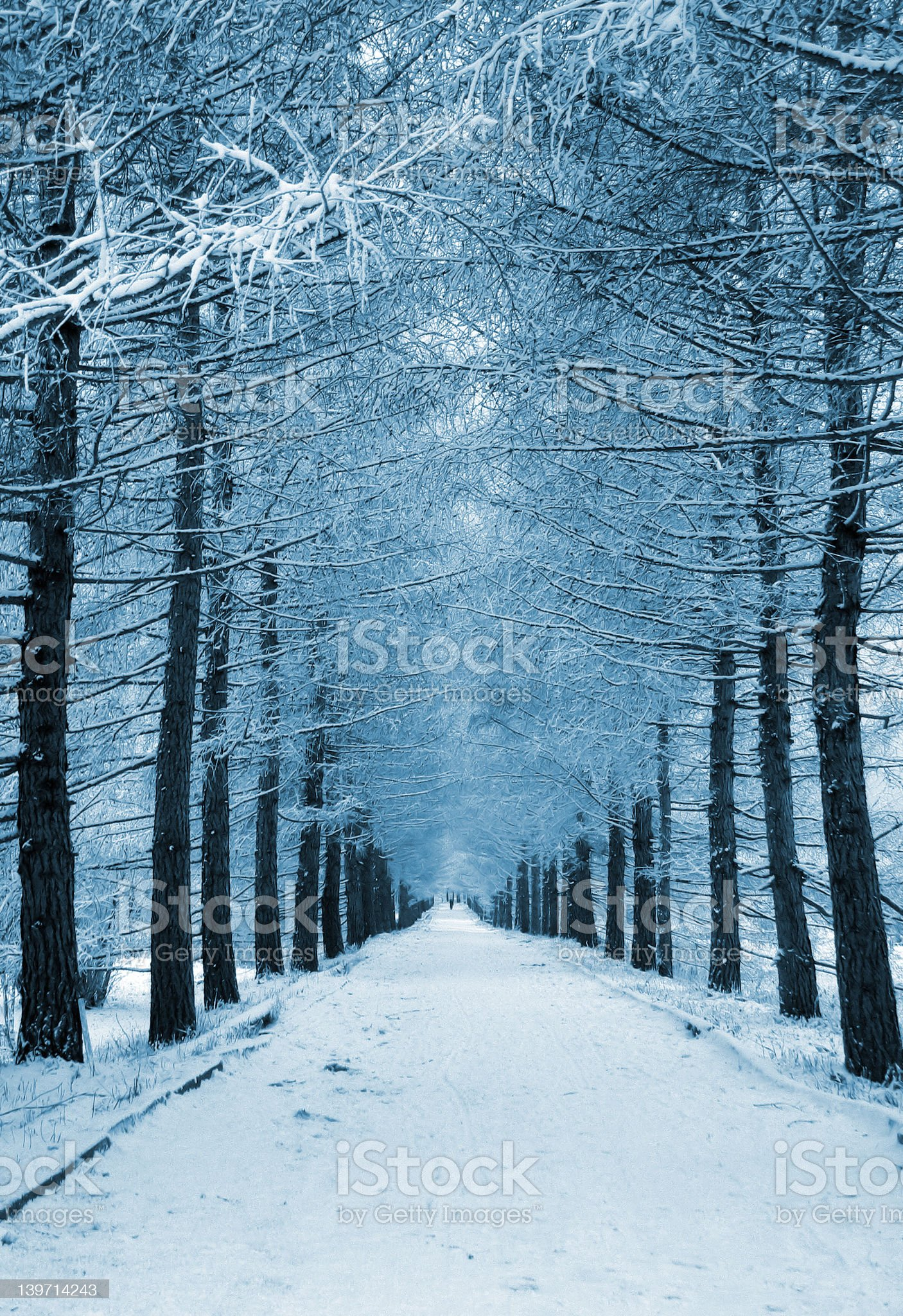 Snowy Lane royalty-free stock photo