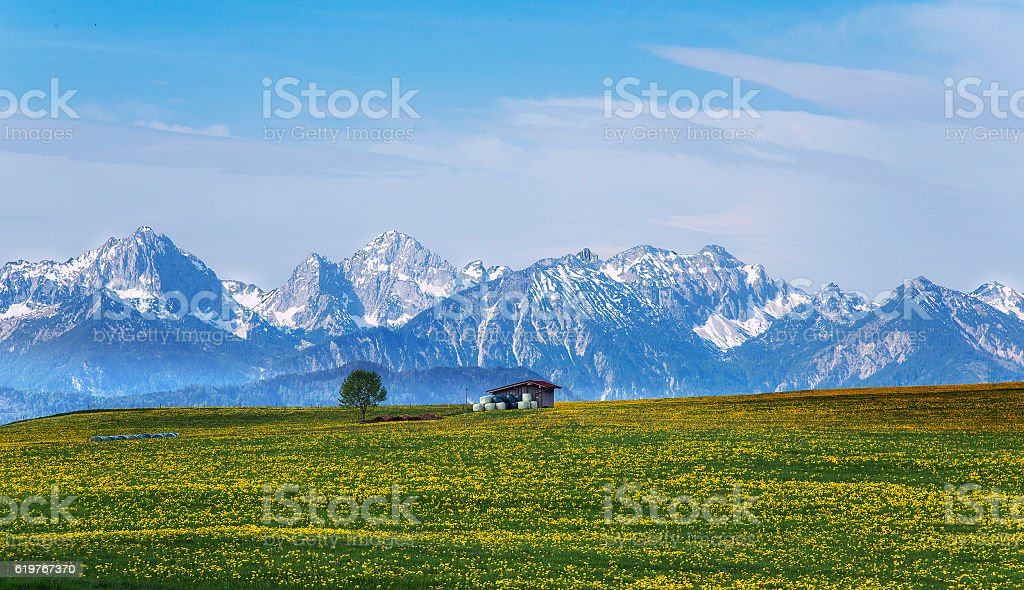 Snowy Mountains and dandelion stock photo