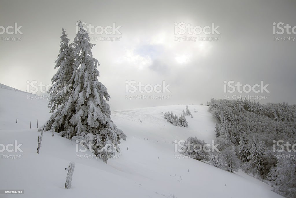 snowy mountains and fir trees royalty-free stock photo